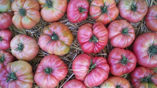 In summer Wynbrandt grew more than 200 pounds of Brandywine tomatoes along with other heirlooms and Sun Gold cherry tomatoes.