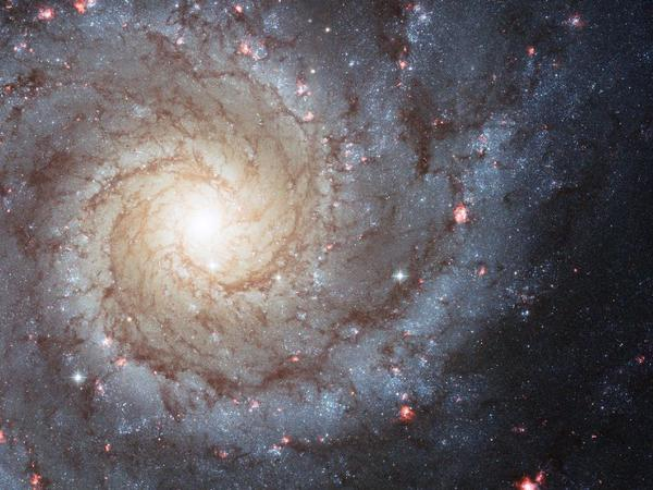 A NASA/Hubble Space Telescope image shows the nearby spiral galaxy M74. The spiral arms are lighted by glowing gas light. The space agency says this indicates an environment rich in star formation.