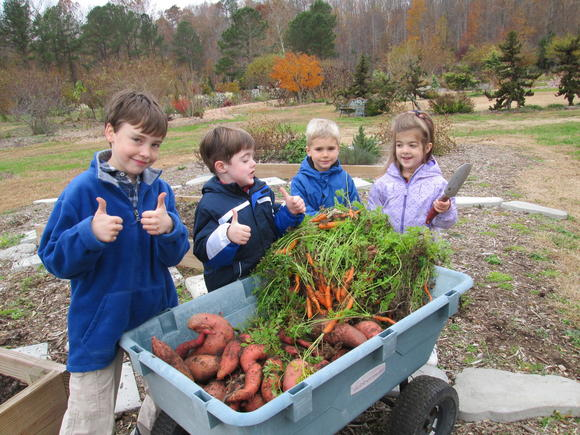 Harvesting sweet potatoes and carrots from the Children's Garden at Brent and Becky's Bulbs: Henry Pritchard, Jack Gibson, Van Hutchins and Katherine Gibson, all of Gloucester.