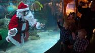 Santa Claus industry gets Christmas boost from resurgent demand