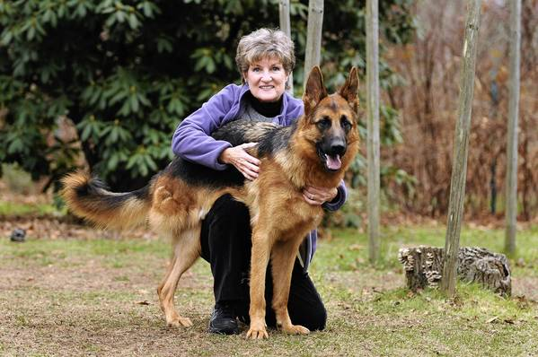 Susan Selden poses with Brave, her 14-month-old German shepherd that she adopted recently. Brave had one of his back legs removed after he arrived at a breeder who bought him from Texas with both legs dislocated due to a genetic condition.
