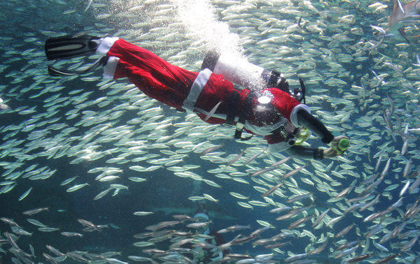 A diving Santa will appear at several Sport Chalet stores on Dec. 15., including the company headquarters in La Canada. Fish not included.