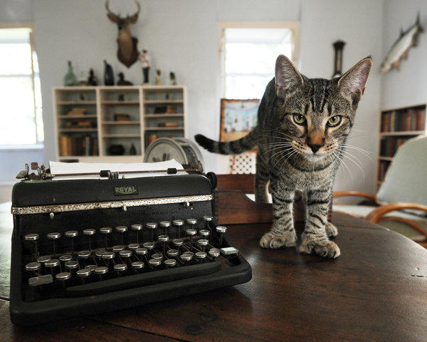 A six-toed cat named Hairy Truman walks on a table in Ernest Hemingway's onetime study at the Ernest Hemingway Home and Museum in Key West, Fla., in 2008. Many cats residing at the museum are descendents of a six-toed cat given to Hemingway in 1935.
