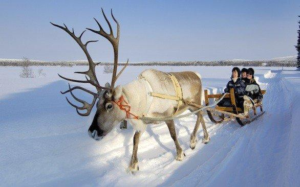 Reindeer sledding is one of the winter activities on Travcoa's tour of Sweden and Scandinavia.