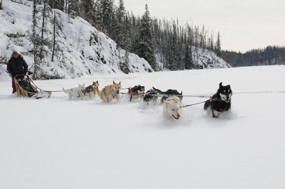 Dog sled adventure