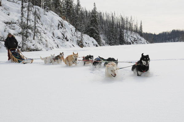 You can participate in a mushing adventure, pulled by a team of huskies, on trips of varying lengths in Saskatchewan, Canada.