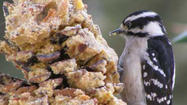 Cole's wildbird seed offers these recipes for making homemade treats for birds in you yard.  For hangers, use red ribbon, natural twine, wool or raffia, suggests owner Elaine Cole.