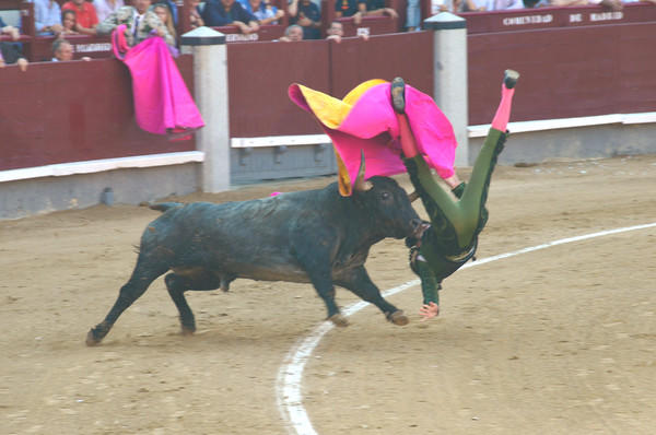"My wife and I live in Bel Air, MD. Last September, we enjoyed a ten night vacation in several historical locations in Spain. We had pre-purchased tickets for a bull fight on our very last night in Madrid at the historic 25,000 seat Plaza de Toros. A typical bull fight consists of six bull fights,with three matadors fighting two bulls each. The entire bull fight or ""au corrida"" usually lasts between two and three hours. I was lucky enough to have my camera to my eye during the first bull fight of the evening when this particular matador¿Äôs day took a sudden turn south. After a fifteen second skirmish, which probably seemed like an hour, the bull was distracted by ring assistants long enough to allow the matador to escape without serious injury. Although badly scraped, bruised and second guessing his career choice, he was able to stagger off under his own power, but was unable to continue. While bull fighting has become increasingly controversial, it is still widely popular throughout most of Spain, and Spaniards consider it an important part of their cultural heritage."
