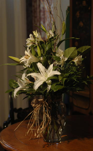 Lilies are more dangerous than poinsettias.<BR><BR>  ¿Lilies can cause kidney failure if animals eat the leaves, stems or any part of the flower,¿ said Mazzaferro, the emergency and critical care veterinarian at Cornell University Veterinary Specialists in Stamford. ¿Mistletoe can cause vomiting, diarrhea, low blood pressure, and collapse ... English holly can cause vomiting, diarrhea and tremors.¿