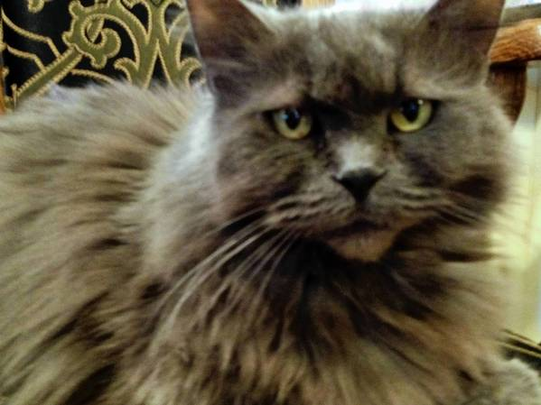 Serenity, a 9-year-old Persian cat in Bethlehem, is ruining the house by urinating outside her litter box.