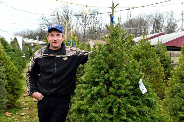 Fountain Hill Fire Department Lt. Tim Heffner poses near one of the many Christmas trees they have for sale. The money goes to help the fire department with equipment. They are one of many groups that sell Christmas trees to raise money.