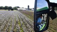 Bumper crop is year-round job for Isle of Wight farmers