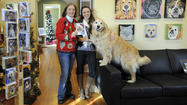 Mother-daughter pet-portrait business gets boost from Oprah