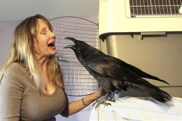 Debbie Porter and Edgar, the raven, sing to each other. Porter is applying for a restricted species permit to get back and continue to rehabilitate hurt birds.