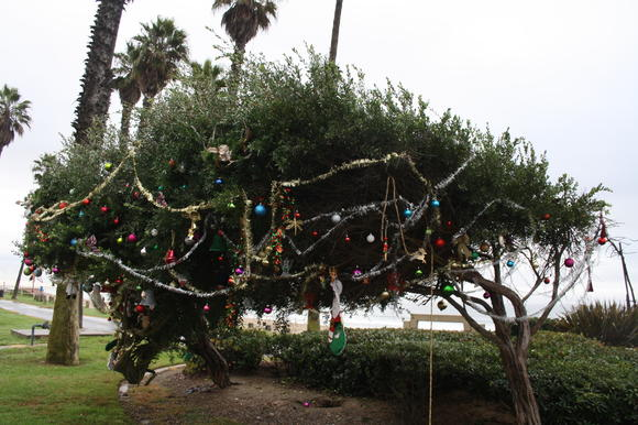 At Christmas, Dane Williams' parents, Valen and Jim, hold a ceremony at a tree where Goldenwest Street meets Pacific Coast Highway. They decorate the tree in honor of Dane, who was killed in 2008. This year, they asked attendees to decorate in honor of someone near and dear that has passed away.