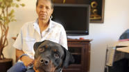 Hazel Sanders and her Rottweiler service dog, Jurnee, are preparing to move into an apartment she can afford after the management company agreed to drop objections based on the Maryland Court of Appeals decision earlier this year defining pit bulls as inherently dangerous animals.