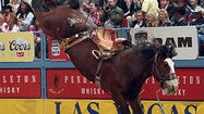 The South Dakota saddle bronc horse Chuckulator dominated the 2011-12 pro rodeo season.
