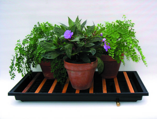 Small plants in pots create an indoor garden environment to enjoy.
