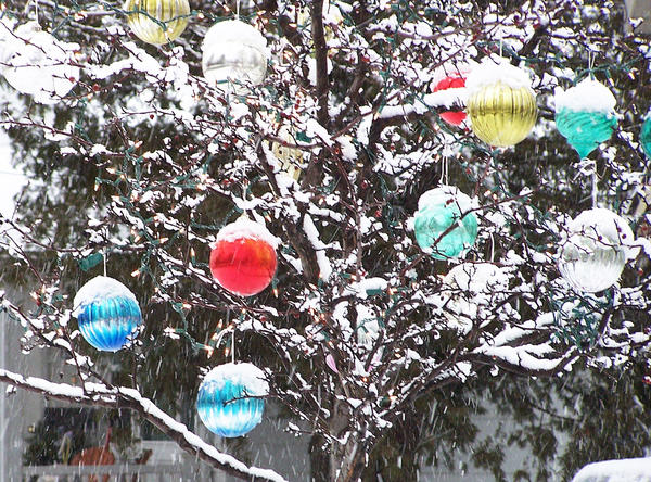 Ornaments hang heavy with wet snow in a tree at a Petoskey residence.