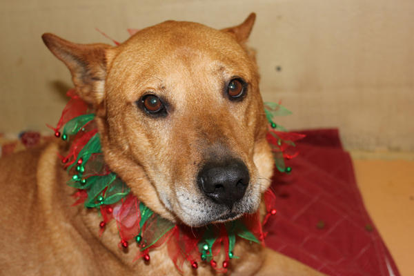 Cartman is available for adoption just in time for the holidays.
