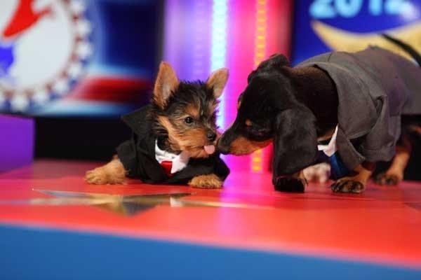 "Canine candidates ""Mitt Ruffney"" and ""Bark Obama"" debate the issues in the new special ""The Year in Pup Culture"" airing at 9 p.m. on Animal Planet."