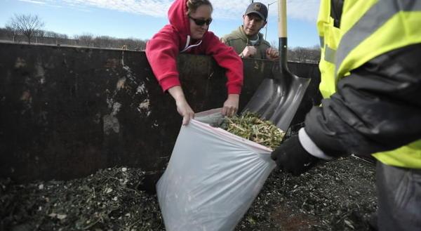 Options Vary For Recycling Bmore Christmas Trees Tribunedigital  - Baltimore City Christmas Tree Pickup