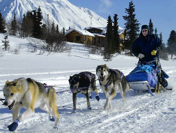 United World Travel offers an 11-day trip that includes the start of the Iditarod in Alaska.