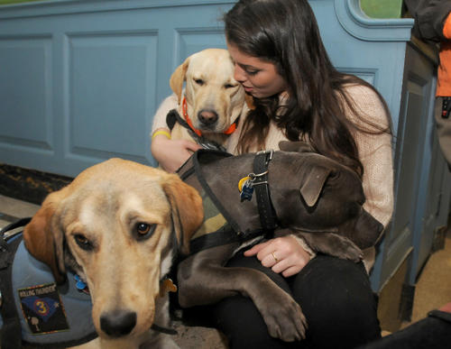 Alexis Palladino of Litchfield spends some time with service dogs from South Carolina, that are acting as therapy dogs this week at Edmond Town Hall in Newtown Saturday.