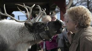 Illinois couple enjoy reindeer games