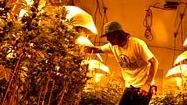 Photos: Environmental impact of marijuana growing in California