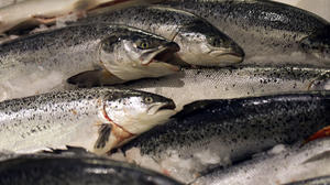 FDA closer to approving biotech salmon, critics furious