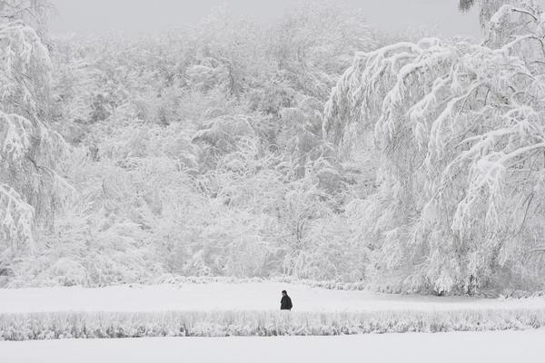 A man walks past snowy trees in a park, with the air temperature at about minus 8 degrees Celsius (17.6 degrees Fahrenheit), in Russia's southern city of Stavropol, December 24, 2012. Russia endures an abnormally cold winter, the most severe in more than 70 years, according to local media.