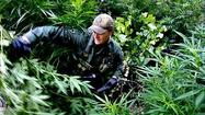 Photos: Raiding a marijuana grow in the Southern Sierras