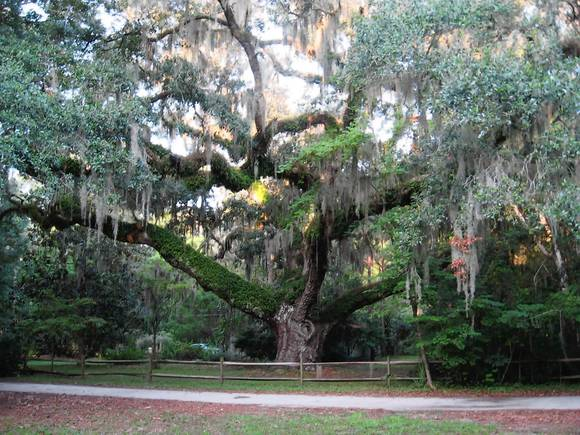 The Secession Tree