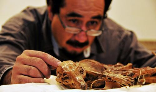An archaeologist from Mexico's National Institute of Anthropology and History looks at a mummified dog.