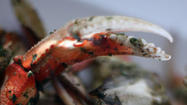 Recipe: Grilled Dungeness crab