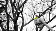 BGE removing your trees? See if the utility will pay for replacements