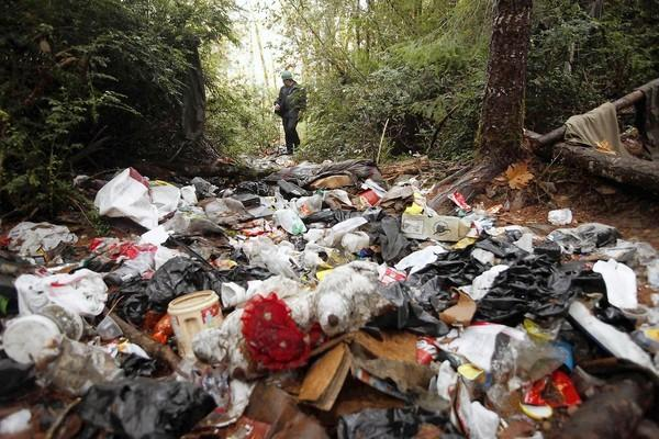 Wildlife technician Aaron Pole surveys a forest trashed by growers. Carbofuran, an insecticide lethal to humans in small doses, is found regularly at large-scale pot farms. Also flowing into the watershed are rodenticides, fungicides, diesel fuel and other pollutants