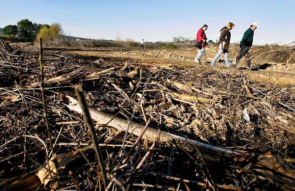 Forty-three acres at the Sepulveda Basin were reduced to piles of broken limbs and bare dirt by the Army Corps of Engineers in preparation for replanting with native grasses.