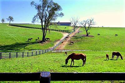 Horses graze at a farm in Woodford County, near the Woodford Reserve distillery in Versailles, Ky.