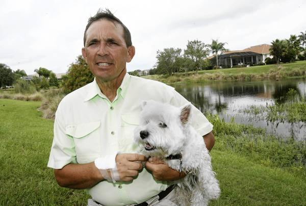 """Steve Gustafson poses with his pet West Highland terrier, Bounce, on Tuesday, September 18, 2012.. Gustafson risked his life to rescue Bounce from the jaws of an alligator. On Friday, as Gustasfson trimmed an oak tree he saw a gator pull Bounce into deep water. He yelled """"You're not going to get her"""" and leaped onto the gator's back. As Gustafson wrestled with the gator, it released Bounce.. (Tom Benitez/Orlando Sentinel)"""