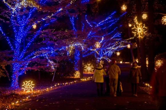 Walk through the colorful holiday light displays at Norfolk Botanical Garden now-Jan. 6.