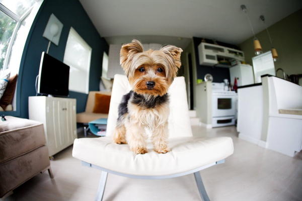 It's harder for a landlord to change the rules if a tenant already has a pet.