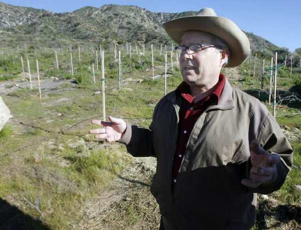 William Johnson stands by the persimmon orchard he planted seven years ago above La Cañada Flintridge.