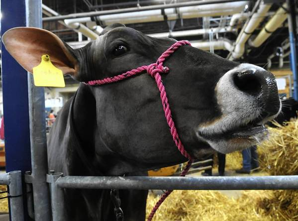The 97th Annual Pennsylvania Farm Show at the Pennsylvania Farm Show Complex and Expo Center in Harrisburg runs Friday to Jan. 12.