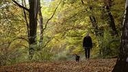 Walking linked to fewer strokes in women