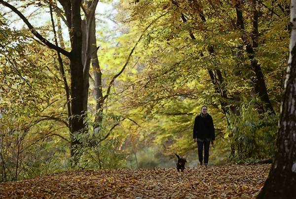 A woman and her dog walk along trees during a sunny autumn day in a park at Berlin's Wilmersdorf district