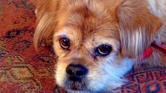 When Spencer Tracy, a rescued terrier mix, became too old and too ill to recover, Marilynn Griffin took her beloved pet to the vet to be put to sleep, then to Family Pet  Cremation Center so she could take his ashes home.