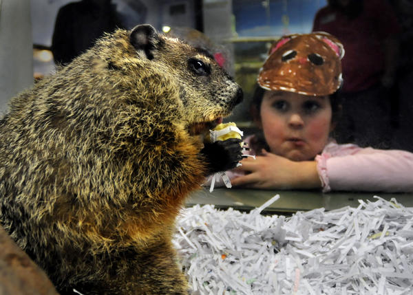 Molly, the groundhog at the Lutz Children's Museum, made her debut as Chuckles VII during the annual Groundhog Day ceremony in 2009. At the ceremony her shadow predicted 6 more weeks of winter.   During the month of February the average temperature was 33.4 degrees which is 1.5 degrees warmer then the normal average temperature. At the end of February the total amount of precipitation was 1.16 inches, down 1.76 inches from the normal amount.