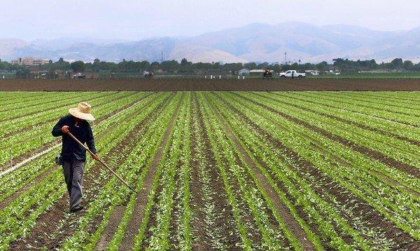 A farmworker hoes a row in a lettuce field near Salinas, Calif., in 2010. The FDA's proposed food safety rules aren't expected to force substantial changes in the way many crops in California are handled because the state already has some of the most stringent requirements in the country.